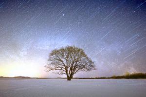3月 ハルニレと星