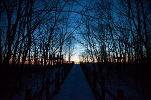 1月 釧路湿原へ