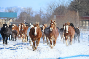 2月 ばんばの朝練 十勝牧場