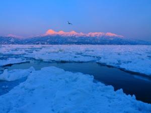 1月 観光船から見た知床連山と流氷